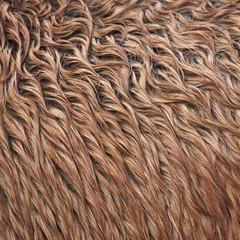 Wild horse fur