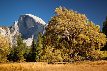 Big Oak and Half Dome  Yosemite Valley