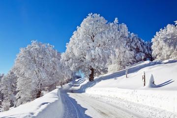 Winter, Schnee, Frost, Baum,  Berg, Straße