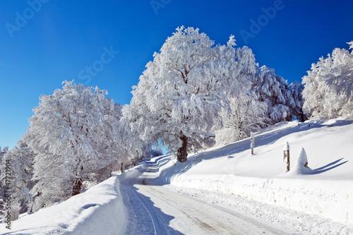 canvas print picture Winter, Schnee, Frost, Baum,  Berg, Straße