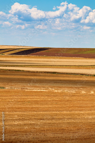 Field of  harvested wheat