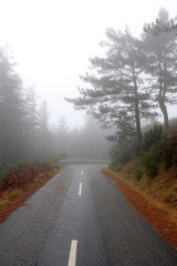 Empty foggy road