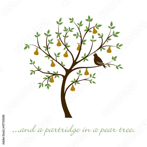 Partridge in a pear tree Christmas card in vector format.
