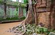 Ta Prohm trees, Angkor Wat