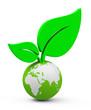 Die Weltpflanze