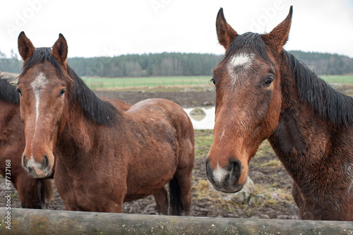 Young horses enduring their first November in Sweden