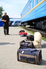 Dog handlers are trained in the customs dogs to look for drugs