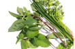group of Chive, sweet basil, Peppermint, coriander on the white