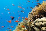 Fototapete Meer - Natur - Fische