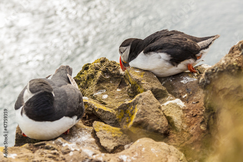 Two puffins - Iceland, Latrabjarg.