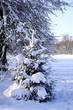verschneiter tannenbaum