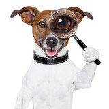 Fototapety dog with magnifying glass