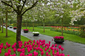 spring blooming in garden