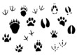 Animal footprints and tracks