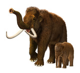 Baby mammoth with mother