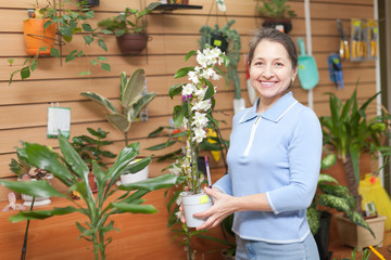 Mature woman chooses Dendrobium orchid