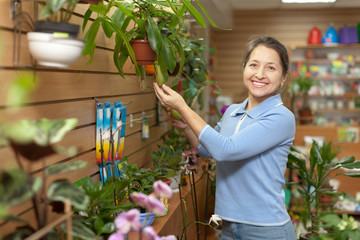 Female florist with Nepenthes plant