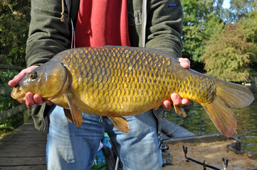 Angler Holding Large Common Carp