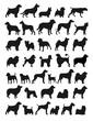 Popular dog breeds illustration - 47788193