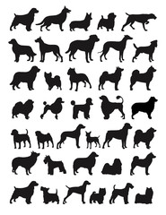 Popular dog breeds illustration