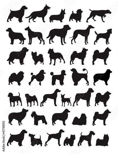 Fototapeta Popular dog breeds illustration