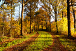 rural road between autumn trees