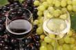 Weisswein und Rotwein