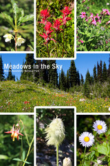 Meadows in the Sky