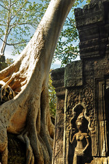 A huge root of tree with ancient Apsara statue at Ta Prohm