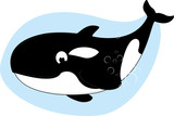 Killer Whale Vector Illustration