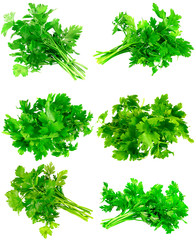Collage  of Fresh parsley on white. Isolated