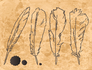 Drawing feathers set