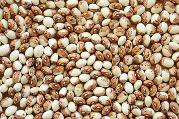 Soup Beans I