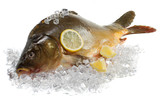 Fresh carp with lemon on ice