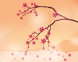 background  with cherry blossom