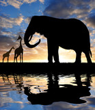 Silhouette elephant with giraffes in the sunset