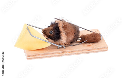 Mouse and cheese in tap, isolated on white background