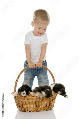 Happy boy with puppies in a basket. isolated on white