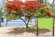 panneau d'affichage devant flamboyant, Réunion