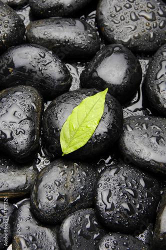 zielony-bluszcza-lisc-w-wodzie-opuszcza-na-mokrym-otoczaku