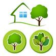 Tree emblem 6