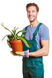 Gärtner hält eine Pflanze