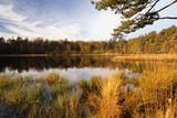 wild forest pond at sunrise