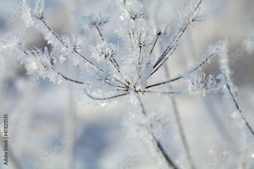 frozen plants © Diana Taliun