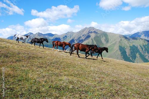 running horses mountains
