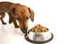 HD - Dog starts to eat dry food