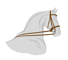 Bridle on horse head