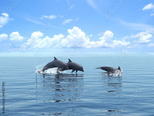 Three dolphins floating at ocean.