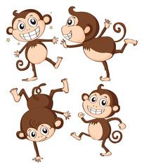 Four monkeys