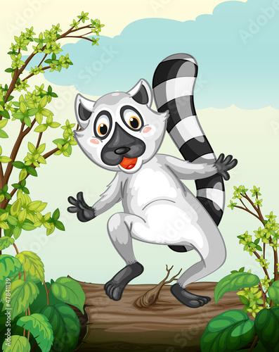 A Lemur in a green nature